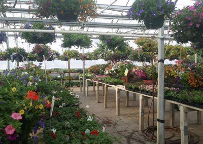 our garden center 11
