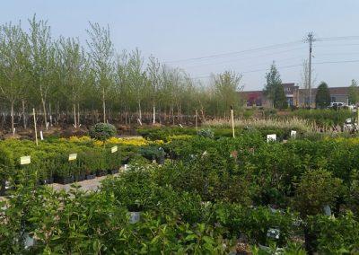 our garden center 17