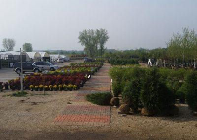 our garden center 19