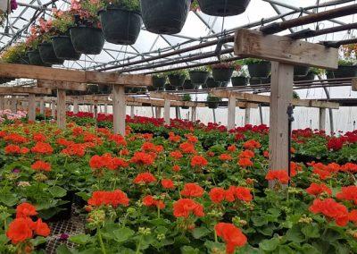 our garden center 4