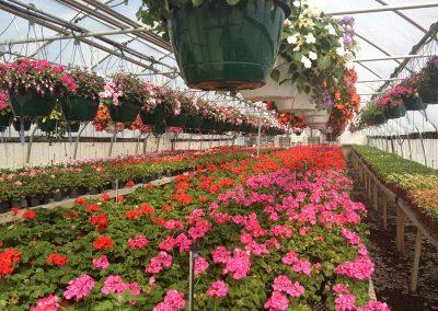 our garden center 5